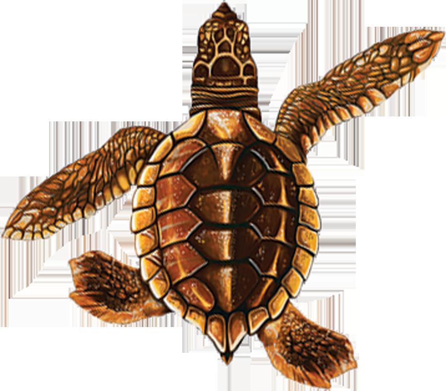 PORC-ST21B-BR  Baby Turtle B (brown) copy.png