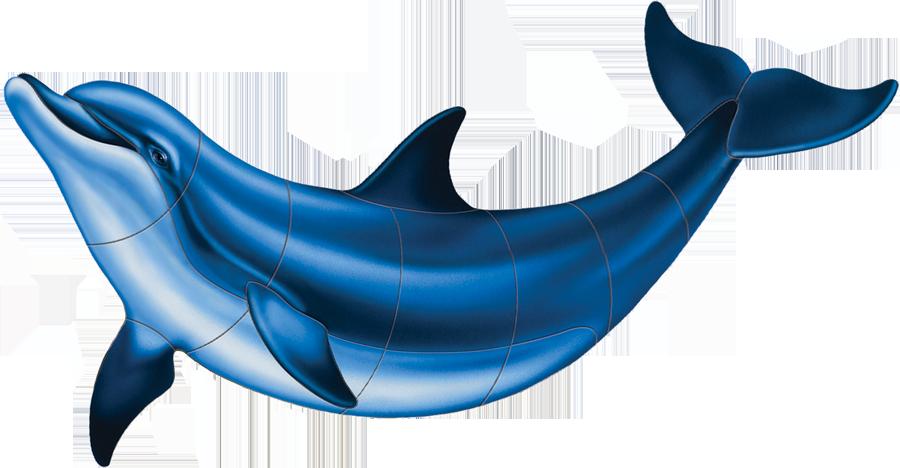 PORC-BD2 Bottlenose Dolphin-B.png