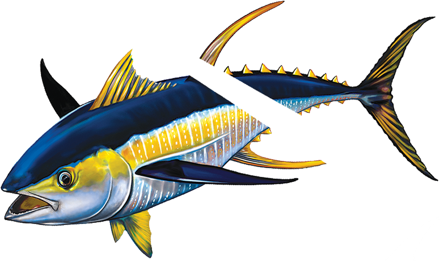 PORC-TN43R  Tuna with Split reverse.png