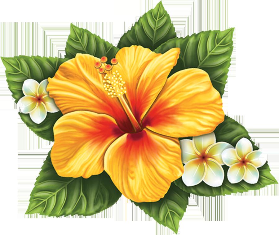 PORC-HF56 Hibiscus Flower (single) copy.png