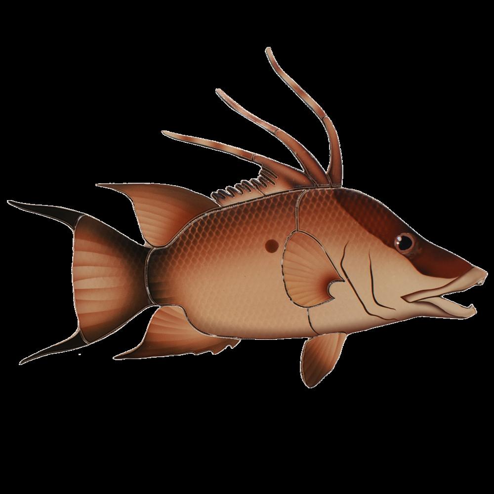 Hogfish.png