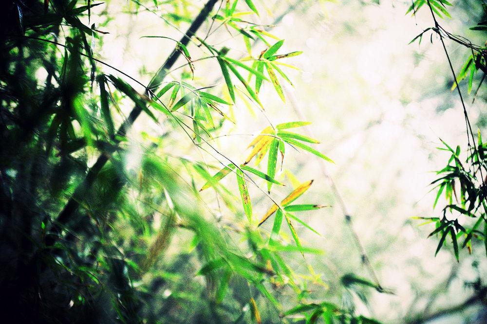 MYC_0229.jpg_effected.jpg