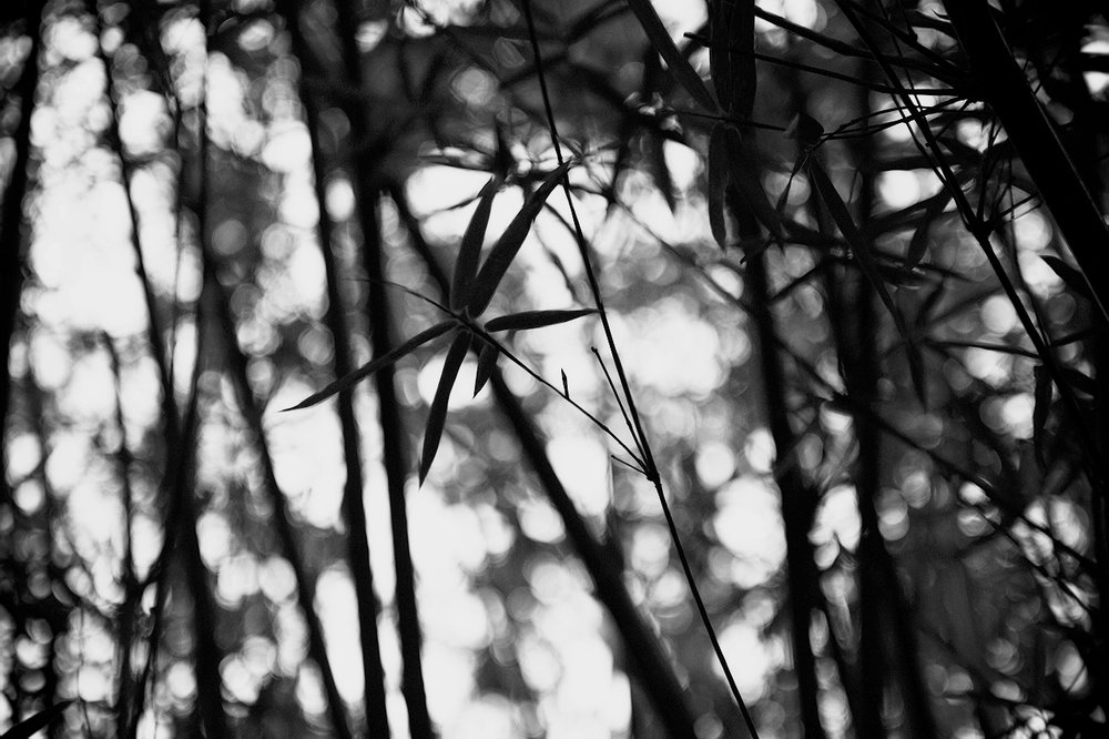 MYC_0794.jpg_effected.jpg