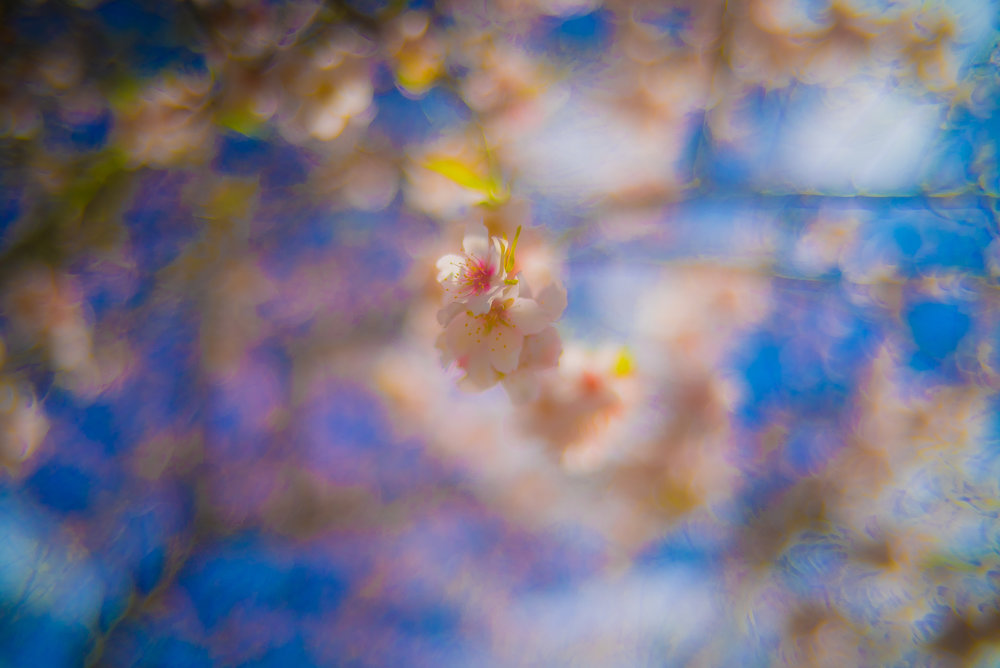 I shot this image of a tree in Spain last week at F1.2 and the out of focus Bokeh is crazy.