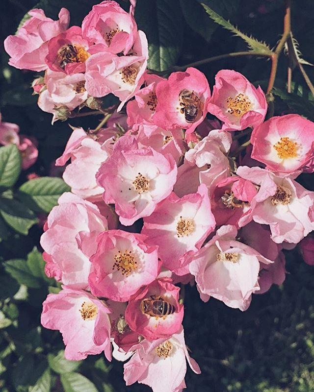 Summer vibes 🌸☀️ #antonhoney #beekeeping #honeybees #beelove #nature #freebees #carniolanbees #beekeepinglife #savethebees #beehive #slovenianbeekeeping #beethinking #springiscoming #pollen