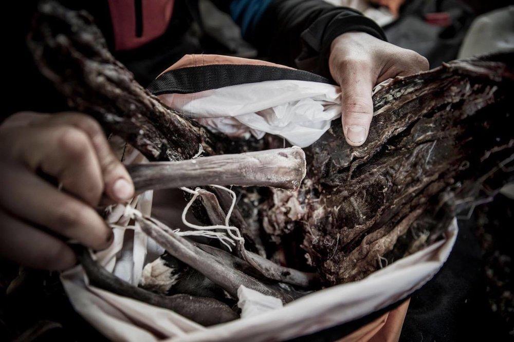 Tørka tunger og kjøtt fra rein. Foto: Øyvind Nordahl Næss