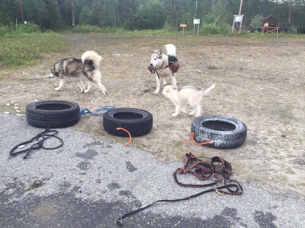 Bootcamp for doggies ;)