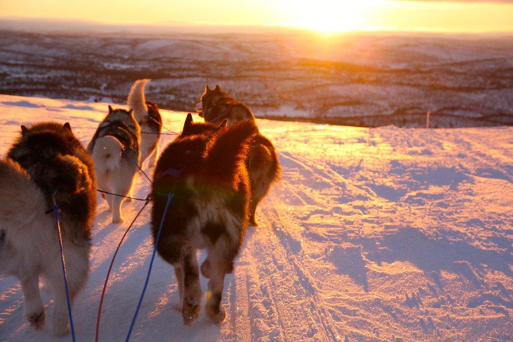 Hundespann i solnedgang, hva mer trenger man?