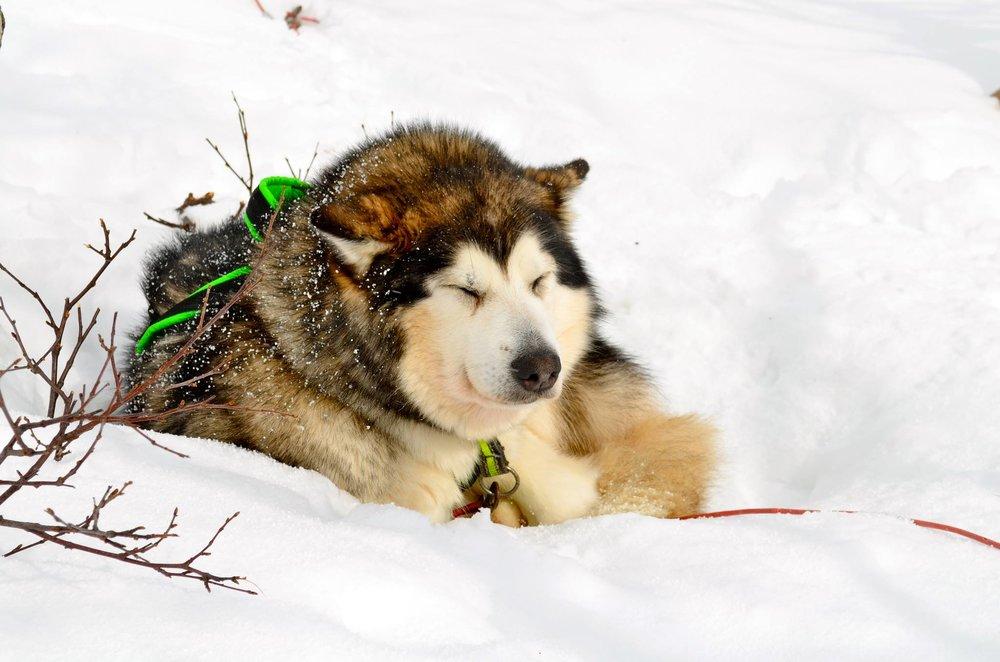 Nanni koser seg i snøen!