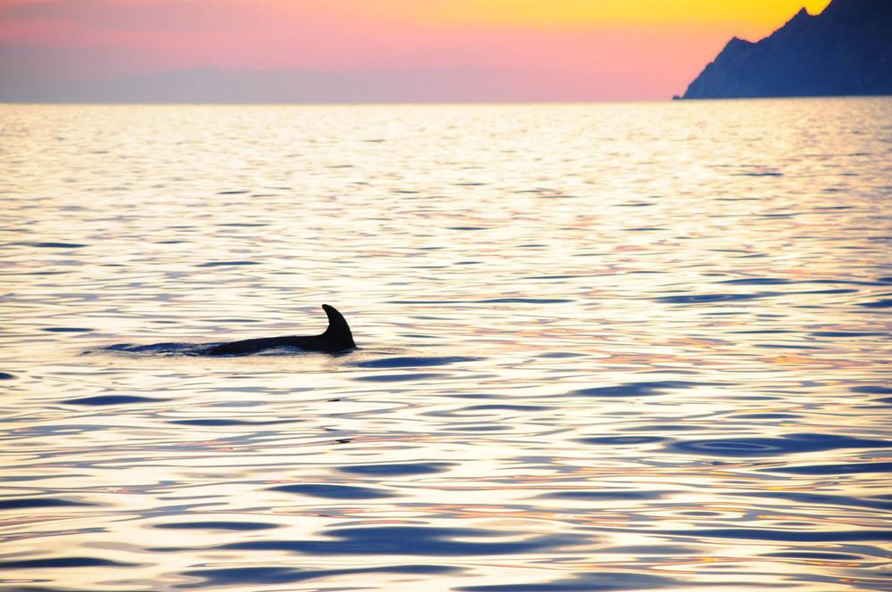 dolphin (2).jpg