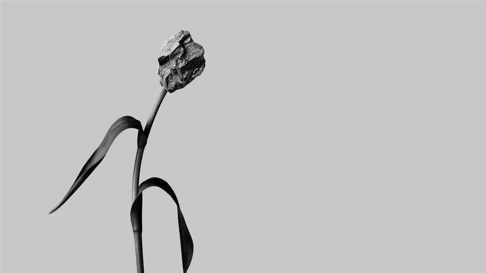 theflower-06.jpg