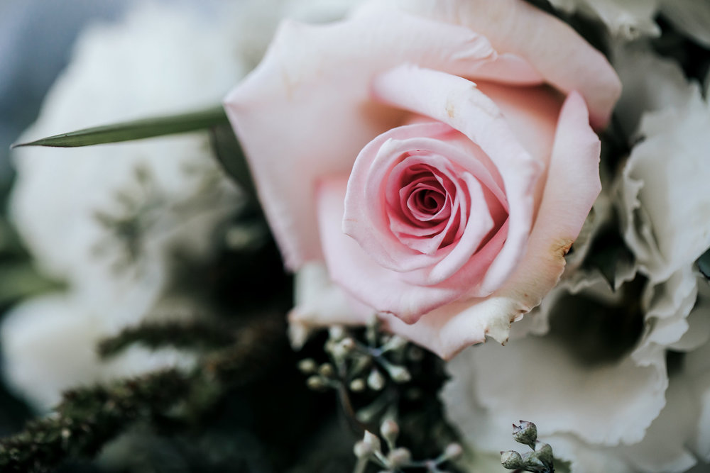 upclose pink rose.jpg