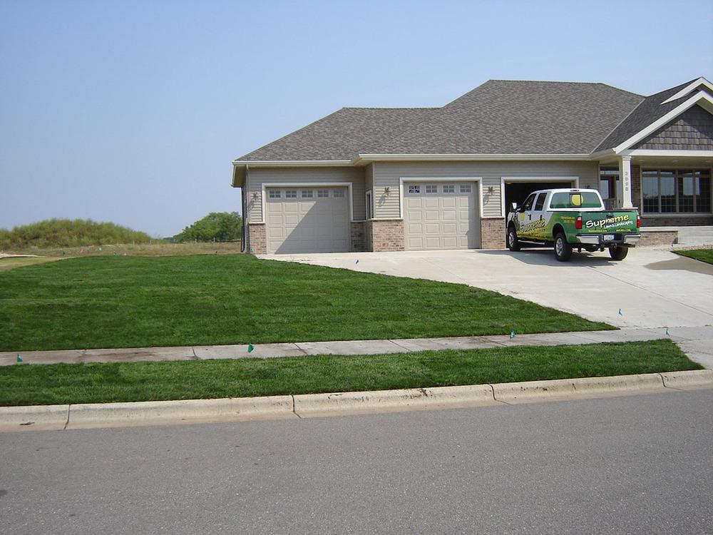lawn seed sod 9.JPG