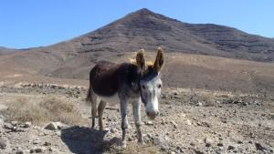 donkey_1.resized.jpg