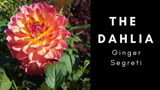 The Dahlia (1) (1).jpg