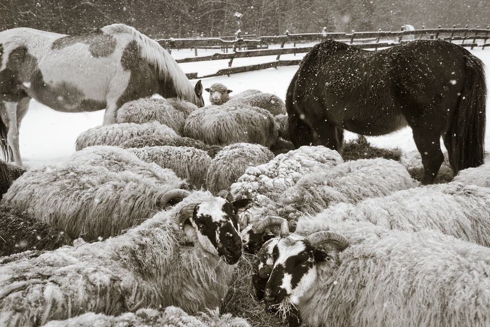 The Gathering, photo by Nina Fuller at Sylvan Gallery