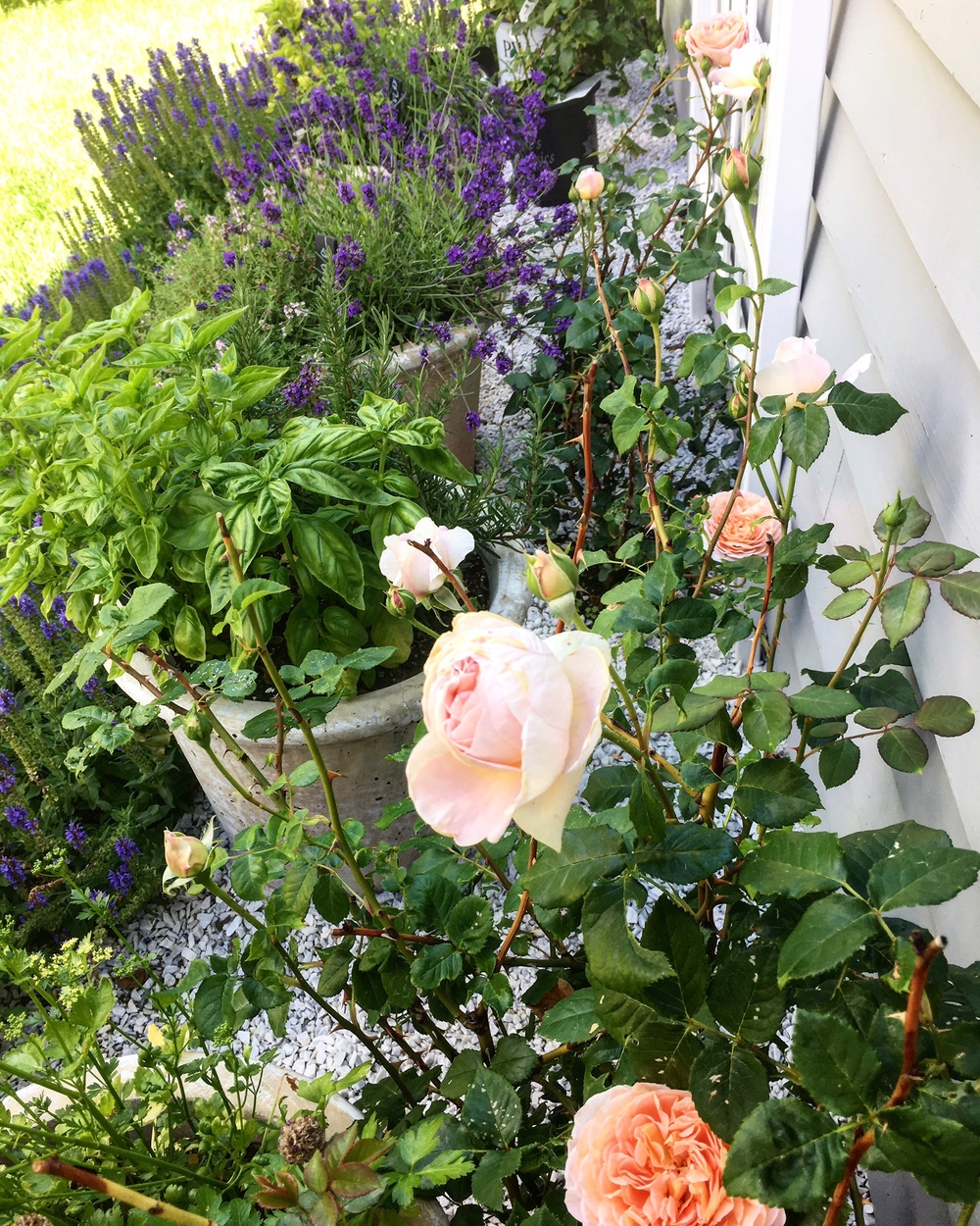 What's better than English roses, lavender, basil and rosemary?