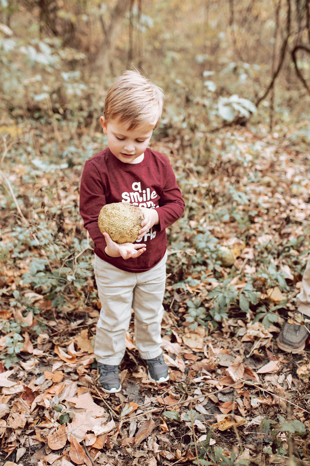 boy finds a dinosaur egg in overton park