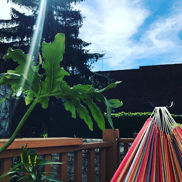 Office attire:  Hammock: ✅ Sun: ✅ Plant: ✅ Bob Marley Music: ✅ The day has officially started!