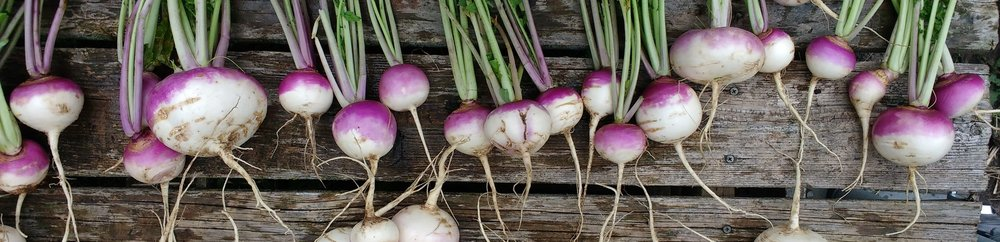 turnip table.jpg
