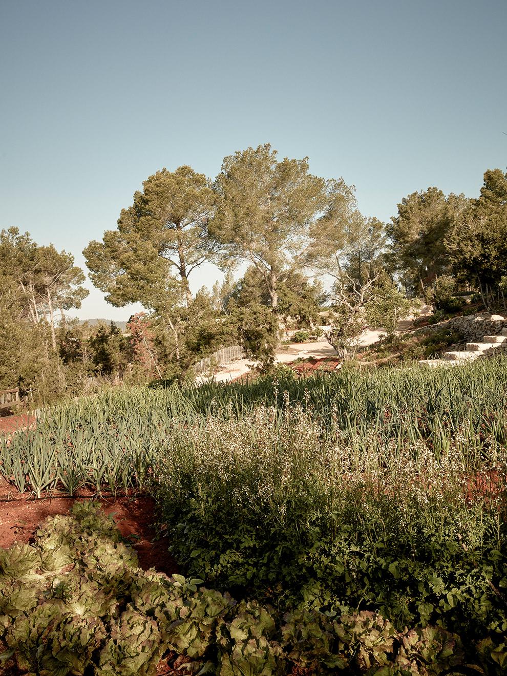 la-granja-ibiza-farm-006.jpg