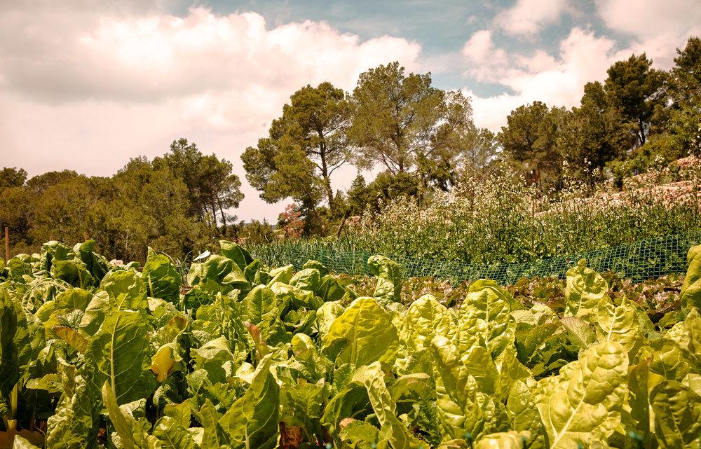 la-granja-ibiza-farm-009.jpg
