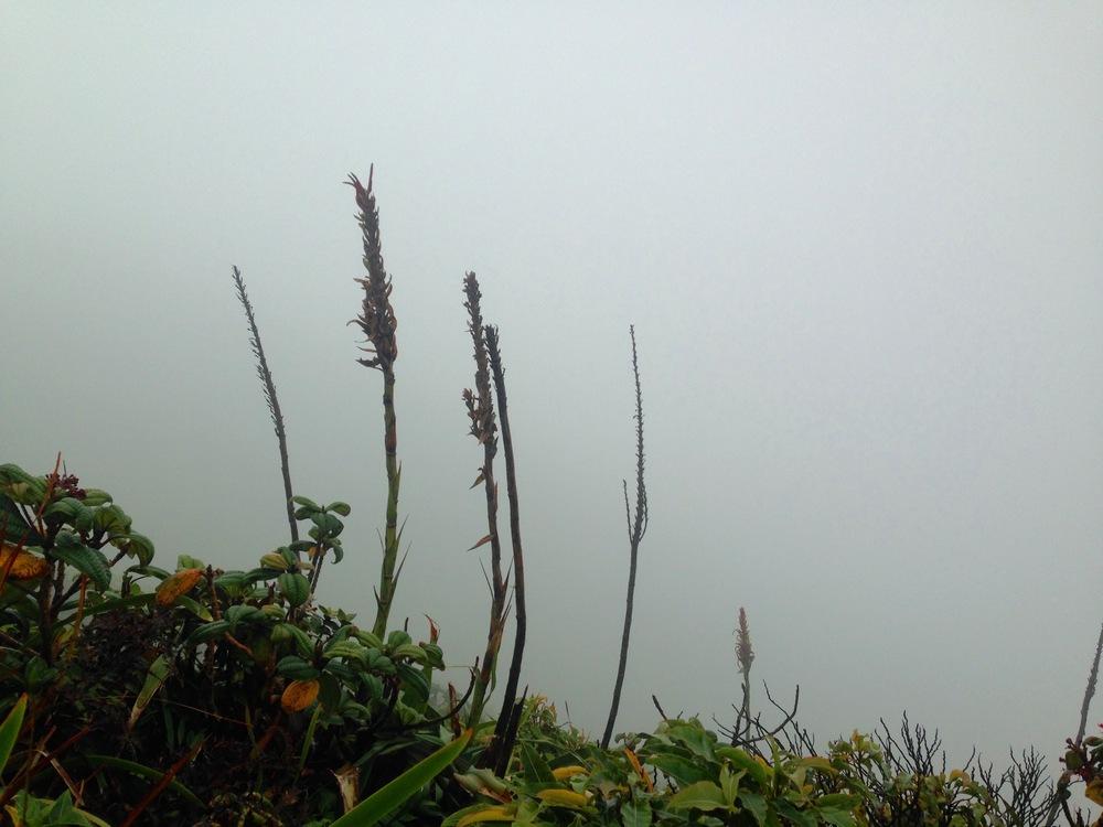 View plants.jpg