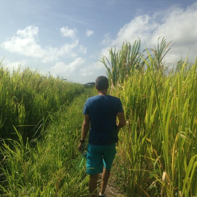 Grass Trail.jpg