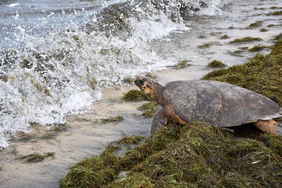 turtlesave.jpg
