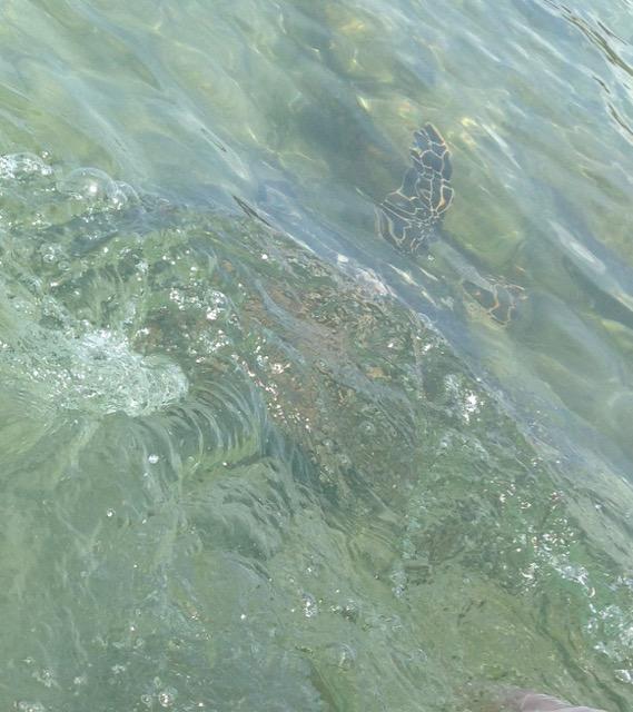 intowater4.jpg