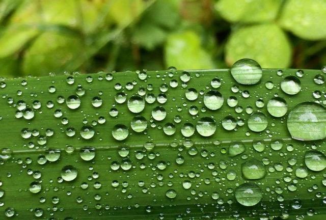Water Drops on Leaf.jpeg