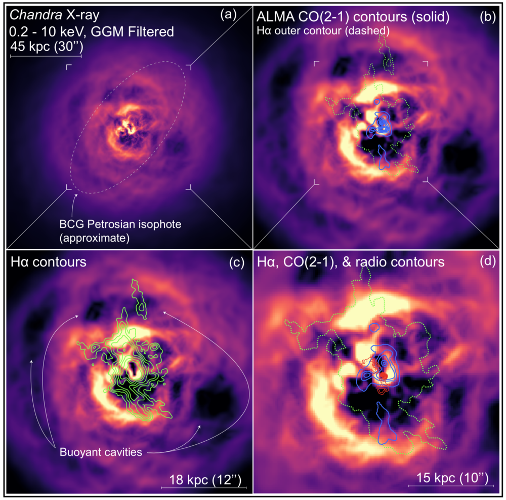 Chandra X-ray, MUSE H-alpha, and ALMA CO(2-1) composite of the Abell 2597 Brightest Cluster Galaxy. Figure from Tremblay  et al.  2018.