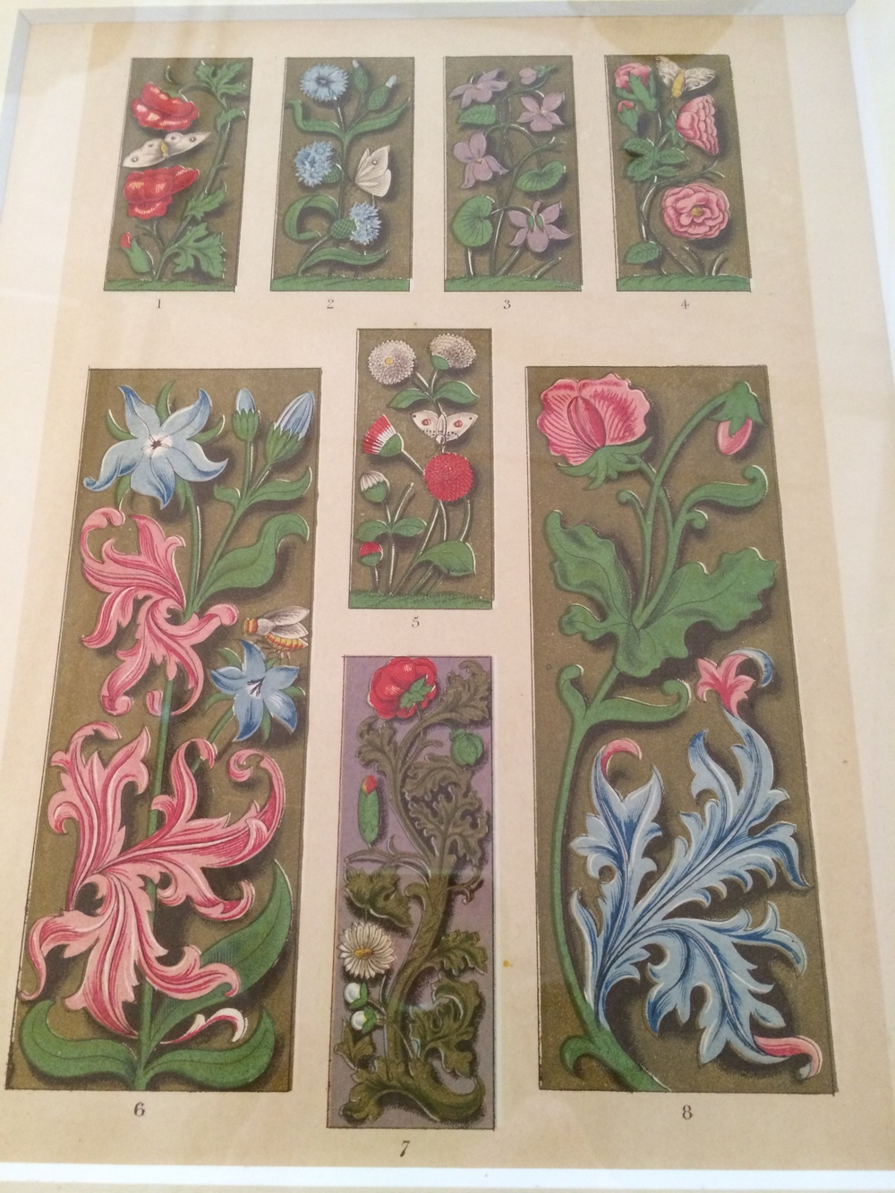 Flowers and Bugs, antique prints