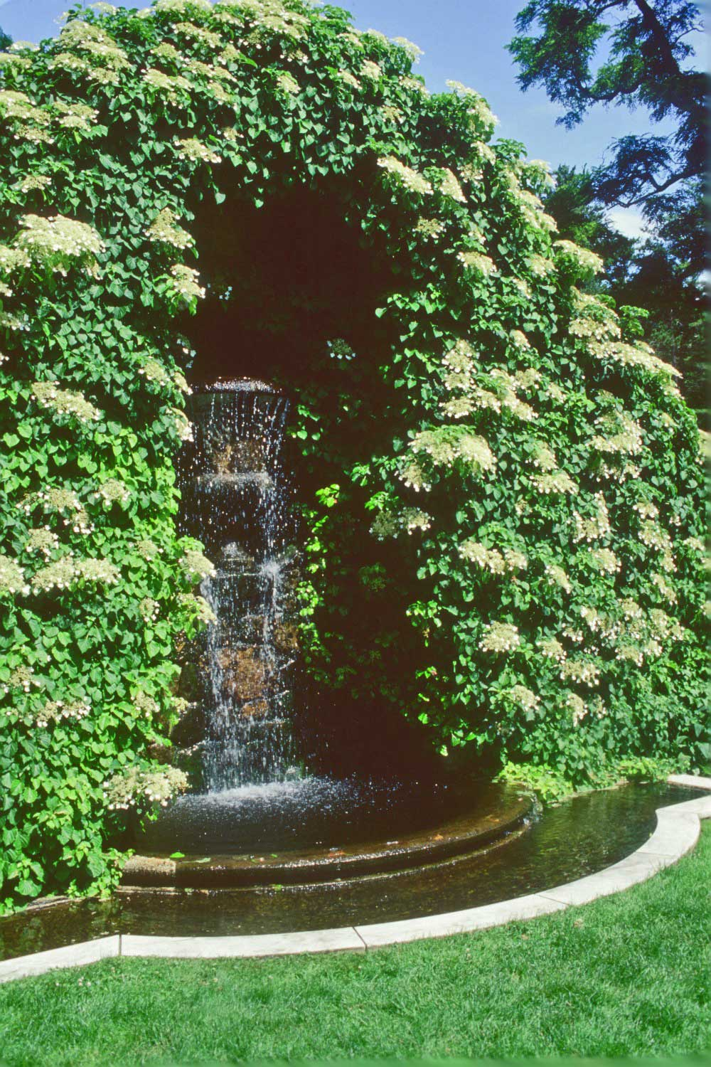 Rose-Terrace-Fountain.jpg