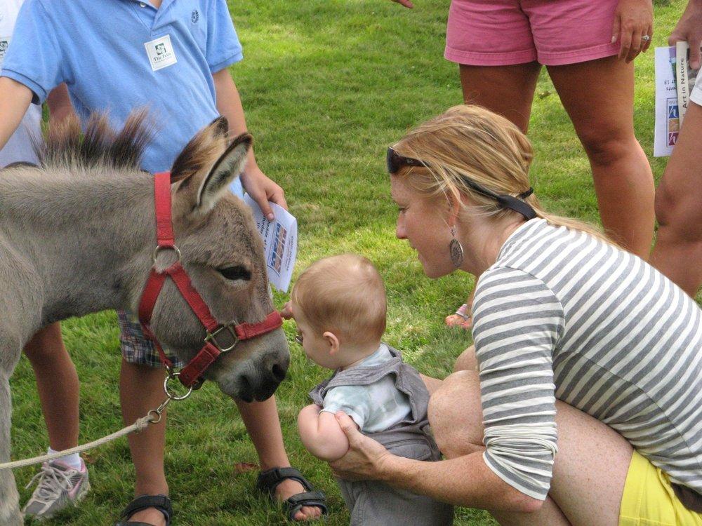 Hay Day Donkey-1.jpg