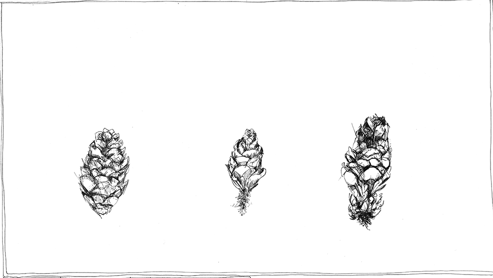 Three Pinecones