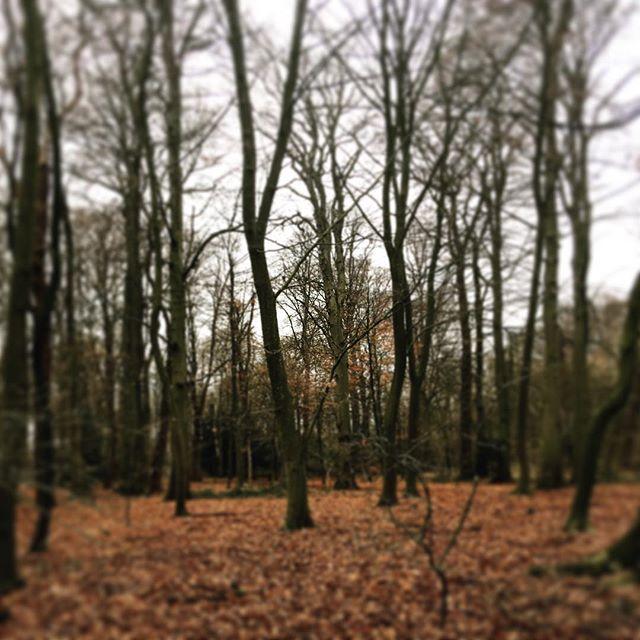 [December 31, 2018 / Haarlem, Netherlands] Farewell 2018... #2018 #farewell #adios #aurevoir #iwontmissyou #family #haarlem #netherlands #happynewyear #artiseverywhere