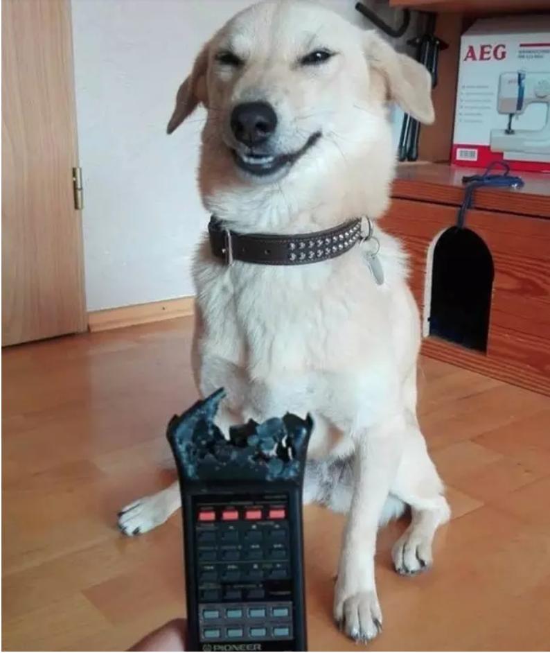 Image source:  https://www.buzzfeed.com/stephenlaconte/funny-bad-dog-fails?utm_term=.rfrgL5ReEV#.yeBo8e6rW5