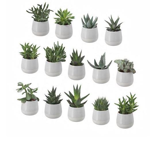 Ikea_Succulents.JPG