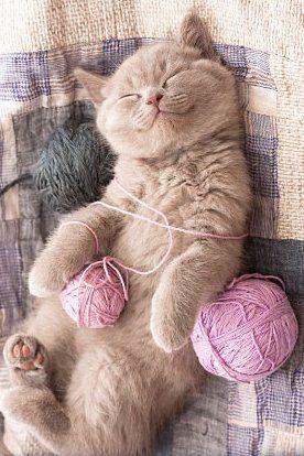 Cat-Yarn.jpg