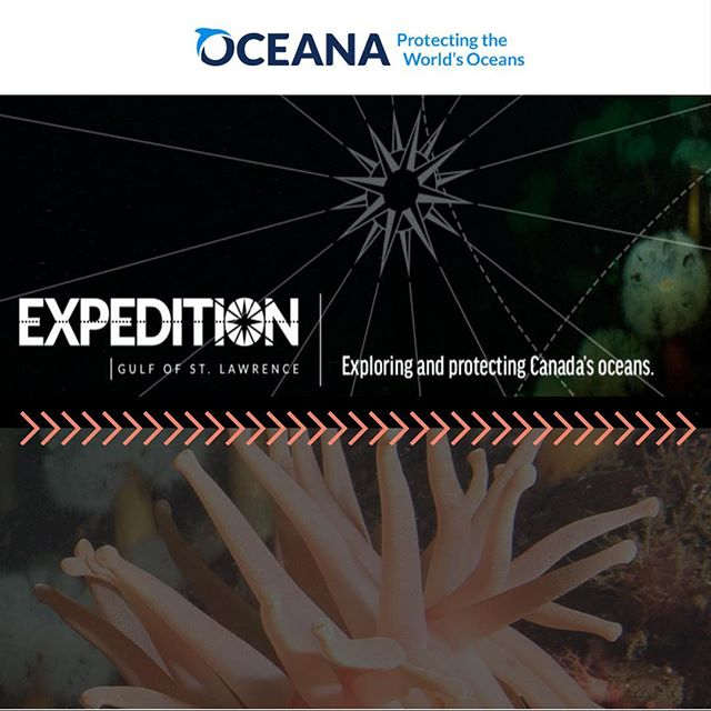 Don't miss your chance to get a rare glimpse of life on the sea floor in the Gulf of St. Lawrence! @oceana_canada is now live streaming their expedition as they use ROPOS to gather samples from the water column and the bottom. Link is in the bio! . . . #science #oceans #research #vitmaminsea #novascotia #oceaninnovation #oceantechnology #gulfofstlawrence #explore #explorethesea