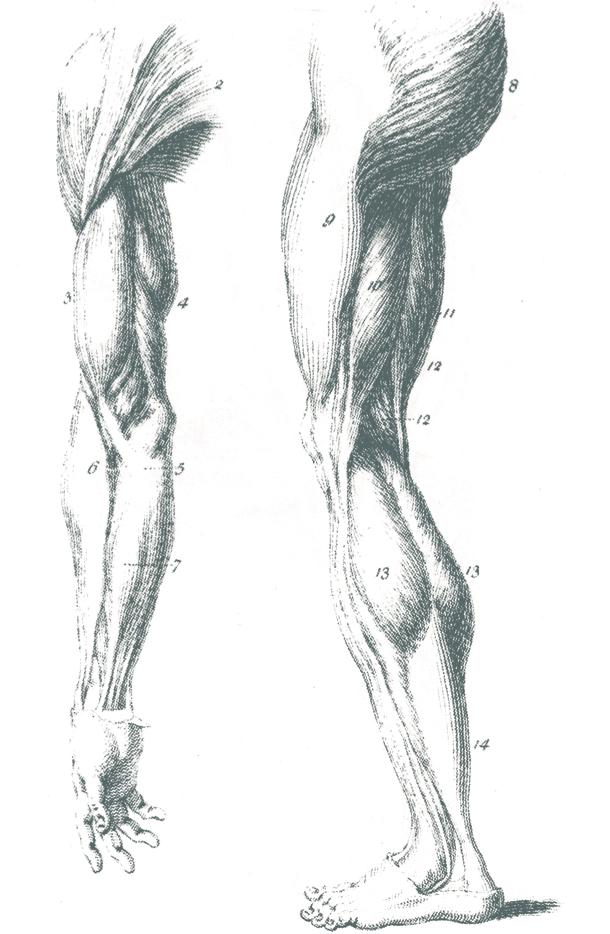 Limbs.jpg