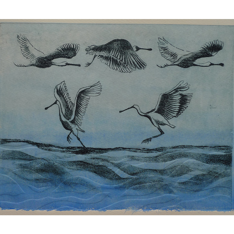 gaby-reade-kotuku-ngutupapa-in-flight-printmaking-christchurch, solar-etching-chine-cole-