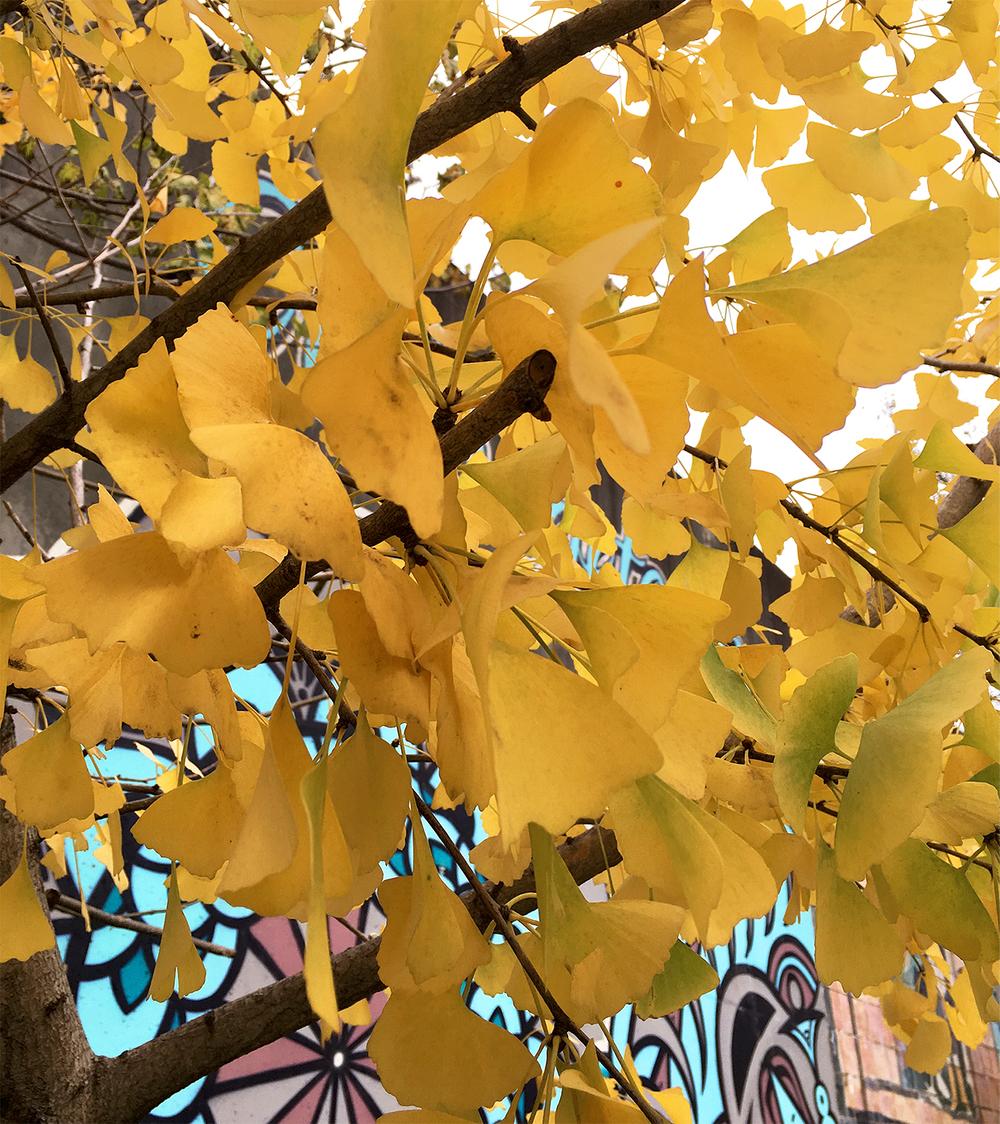genko tree.jpg