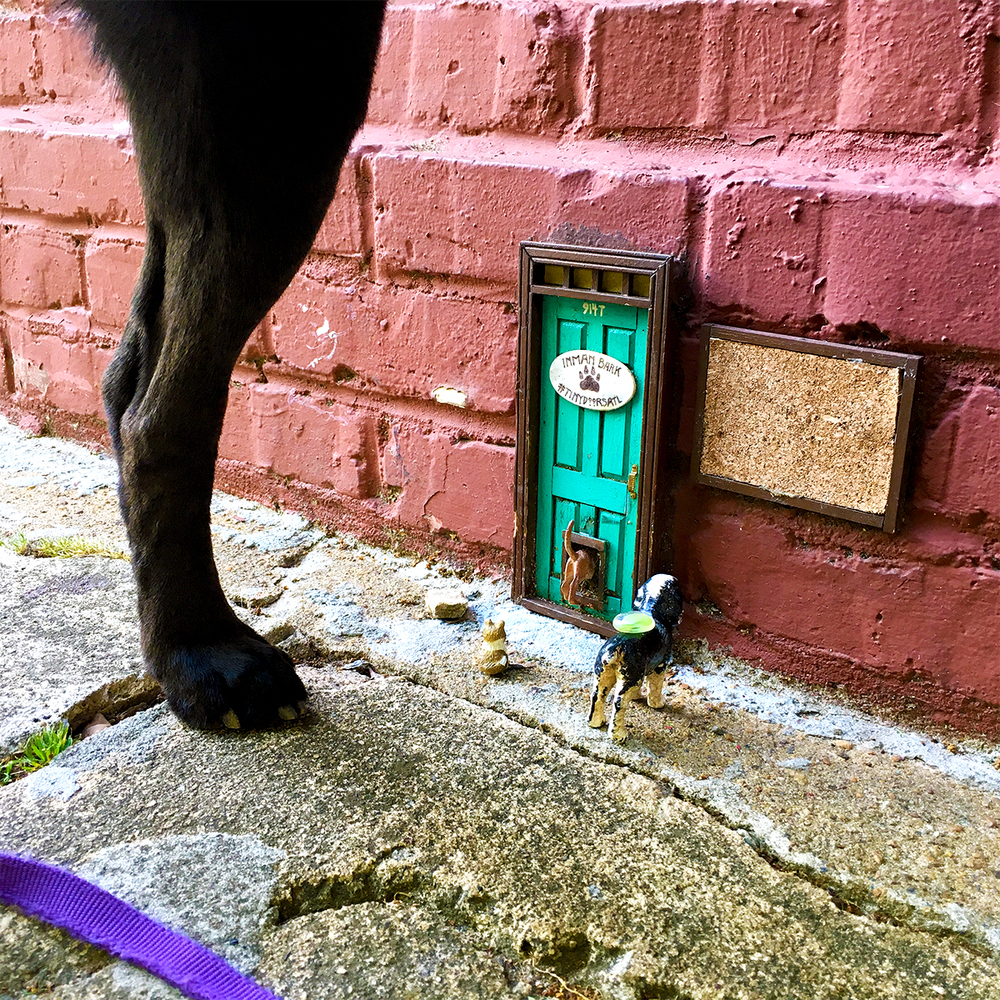 tiny dog door.jpg
