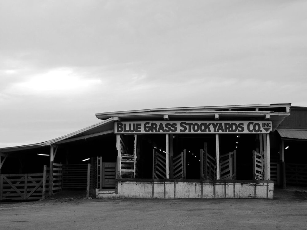 An early photograph of the original Blue Grass Stockyards in Lexington, KY.