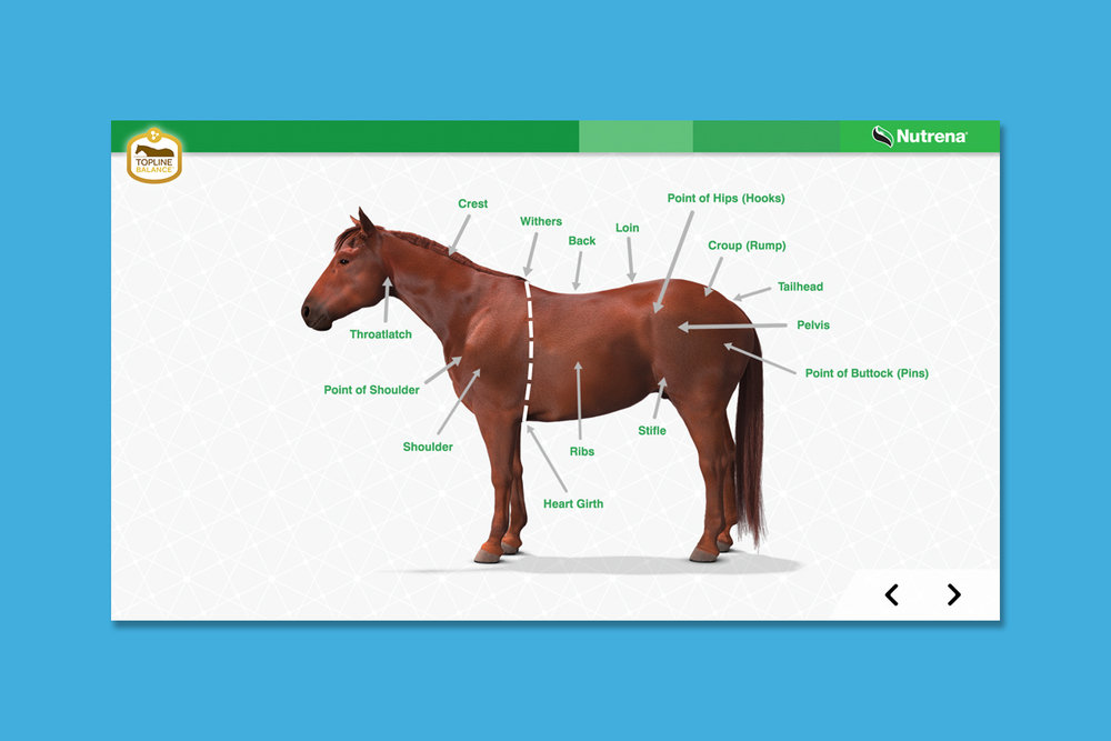Client : Nutrena® Horse Feed  Project : Touchscreen animated training presentation  Details :  About This Training