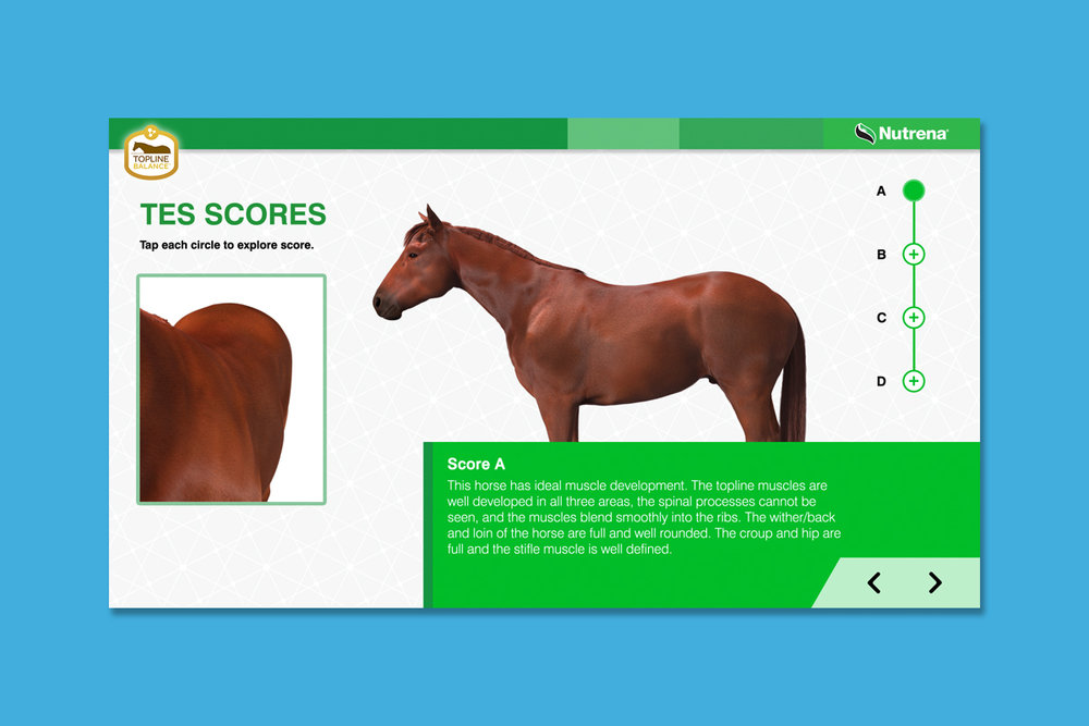 Client : Nutrena® Horse Feed  Project : Touchscreen animated training presentation  Details :  Evaluating TES