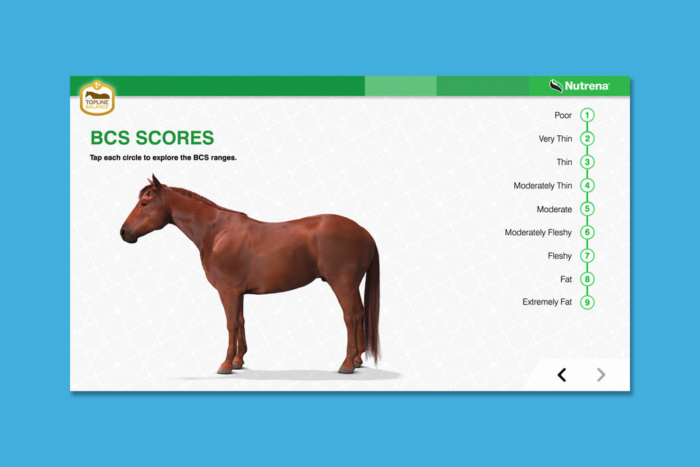 Client : Nutrena® Horse Feed  Project : Touchscreen animated training presentation  Details :  Body Condition Scores