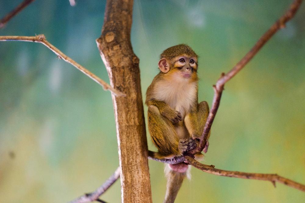 Prague Zoo Praha Monkey